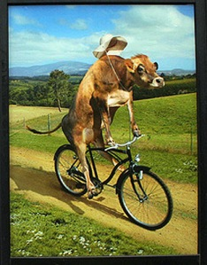 hot-cow_on_a_bicycle